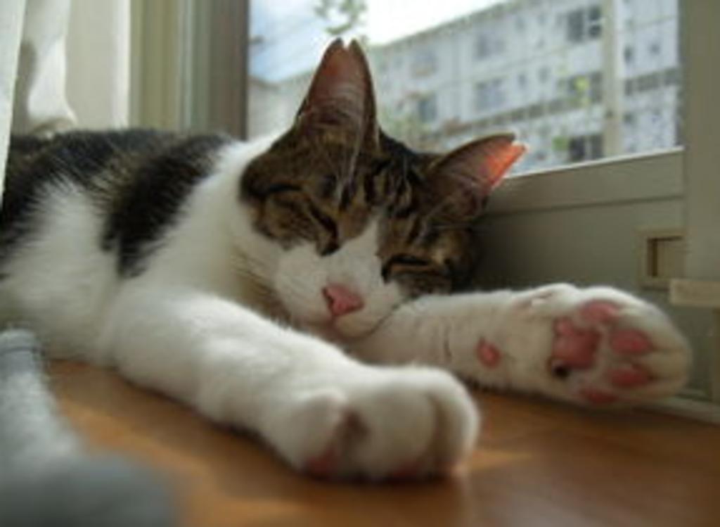 20歳まで猫が元気で長生き出来る為の家づくりセミナー